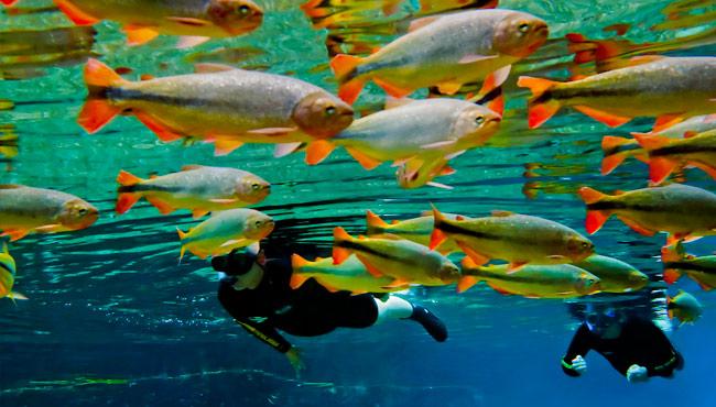 Flutuação no Rio da Prata © Daniel de Granville
