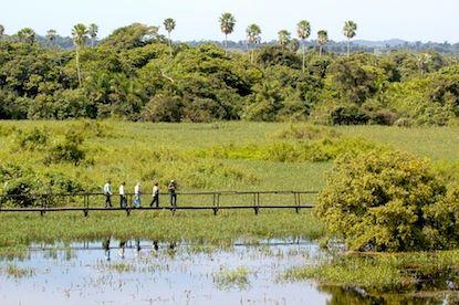 Trilha da Vazante - Faz. San Francisco - Pantanal