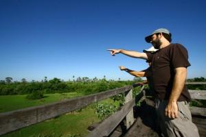 passarinhando no pantanal